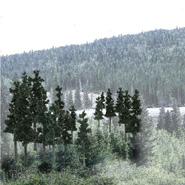 完成樹木パック針葉樹(小)33本入